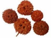 Sušený plod - Ambra gulička 5 ks - oranžová