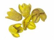 Prírodné bukvice- Bakuli 5ks - žlté