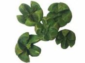 Prírodné bukvice farbené 5 ks - zelené