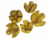 Prírodné bukvice farbené 5 ks - žlté