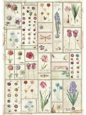 Ryžový papier A3 - Botanic Herbarium