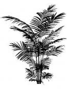 Drevená pečiatka - papraď