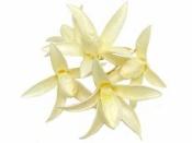 Sušený drevený kvet 5 ks - bielený