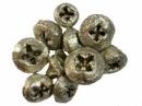 Eukalyptové plody farbené 10 ks - platinovo zlaté