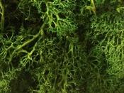 Islandský aranžérsky mach 500 g - trávový zelený