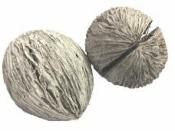 Sušený orech veľký 6-10cm - vintage biely