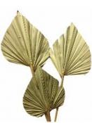Sušený palmový list 14 cm - natur