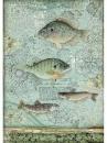 Ryžový papier A4 - ryby