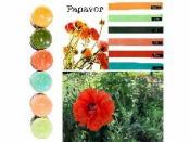 Sada akrylových farieb 5 ks - edícia Papaver