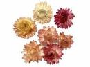 Sušené kvety slamienky - ružové - 10ks