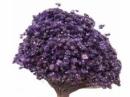 Sušené minikvietky slamienky - fialové