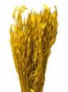 Sušené kvety - klasy proso - žlté