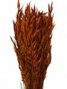 Sušené kvety - klasy proso - tehlové