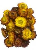 Sušené kvety slamienky 50g - jesenný mix