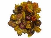 Sušené kvety slamienky 50g - farebný mix