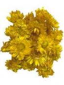 Sušené kvety slamienky 50g - žlté