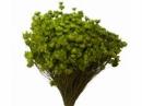 Sušené minikvietky slamienky - svetlé zelené