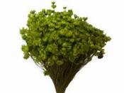 Sušené minikvietky slamienky - zelené
