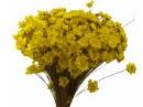 Sušené minikvietky slamienky - žlté