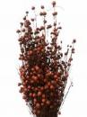 Sušené kvety ľan - terracotta