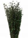 Sušené kvety ľan - zelený