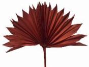 Sušený palmový list - terra