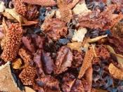 Sušený mix plodov 150 g - oražový