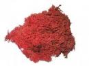 Islandský aranžérsky mach, 30g - červený
