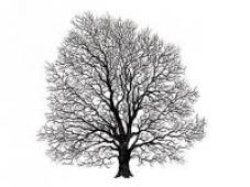 Pečiatka 11x11cm - strom